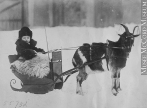 young-master-corriveau-with-goat-sleigh2