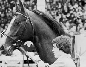 Shergar had a distinctive look