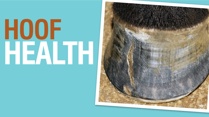 Thumbnail for Nutrition notes: Can diet affect hoof health?