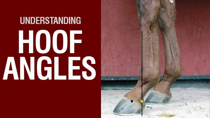 Thumbnail for Understanding Hoof Angles
