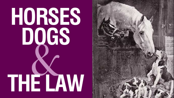 Thumbnail for Horses & Dogs and the Law