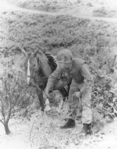 Sgt. Reckless learning her job