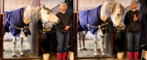 """Go from this impolite muggy horse…to this """"You can't make me take that carrot"""" horse with clicker training."""