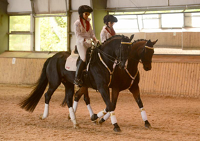 Elvis X2 in the building at Dressage Canada's Horse Power X2 fundraiser. Photo by CAPPhotographic.com