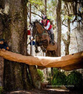 Jessica Phoenix and Patras VR during the 2014 Red Hills International Horse Trials. Photo by Shannon Brinkman