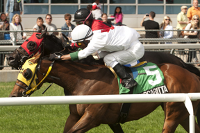 Jockey Patrick Husbands guides Flashy Margarita to victory over the E.P.Taylor turf course in the Bold Ruckus Stakes at Woodbine Racetrack. Photo by Michael Burns Photography