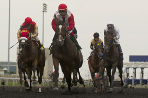 Justin Stein guides La Tia (red and white silks #5) to victory in the $150,000 Ontario Matron Stakes at Woodbine. Photoo by Michael Burns Photography