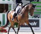 Belinda Trussell of Stouffville, ON enjoyed an extra-special birthday on August 27 after earning a personal best score in the Grand Prix Special at the Alltech FEI World Equestrian Games 2014 in Normandy, FRA. Photo by Cealy Tetley