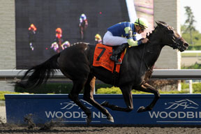 Gary Boulanger guided Leigh Court to victory in the $155,600 Grade 3 Seaway Stakes at Woodbine. Photo by Michael Burns Photography