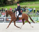 Great Britain's William Fox-Pitt and the 14-year old stallion Chilli Morning are in the lead after the first day of Eventing Dressage at the Alltech FEI World Equestrian Games™ 2014 in Normandy. Photo by Trevor Holt/FEI
