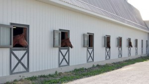 These horses are loving the half open Dutch Doors in each of their stalls.