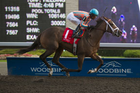Patrick Husbands guides Conquest Harlanate to victory in the $150,000 Mazarine Stakes at Woodbine. Photo by Michael Burns Photography