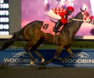 Jesse Campbell guide's Executive Allure to victory in the $150,000 Jammed Lovely Stakes at Woodbine. Photo by Michael Burns Photography