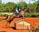 It was double gold for Henrique Pinheiro and Land Quenote Do Feroleto at the FEI South American Eventing Championship 2014 which drew to a close at Barretos in Brazil. Photo by FEI/Claudia Lesconski