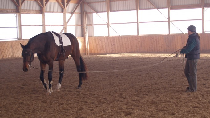 Thumbnail for Bombproof Your Horse Part 2: Lunging and Long-Lining