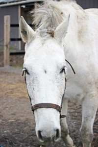 Not the forelock! Luc ends up covered in burrs.