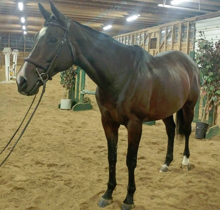 Pine Hollow Stables - Horse CanadaHorse Canada