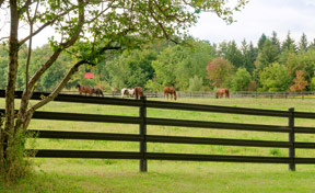 Thumbnail for Black-Flex-Fence-with-horses