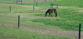 Thumbnail for Electric-Fencing-with-horse