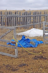 """And yet these blue tarps were trotted straight over."""""""