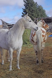 The Best leads in high-headed horse applied studies.......in her very early restarting days this would have been a normal setting, and she could go a couple of higher versions too - one highly reactive very alpha mare on high alert stations took a whole load of horse-think.