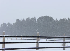 Nothing like a snowy day at the barn.