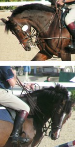 Photos by Inspiritus Equine, Inc.