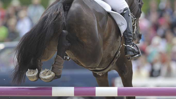 Thumbnail for Improving Hind Legs Over Fences with Mac Cone