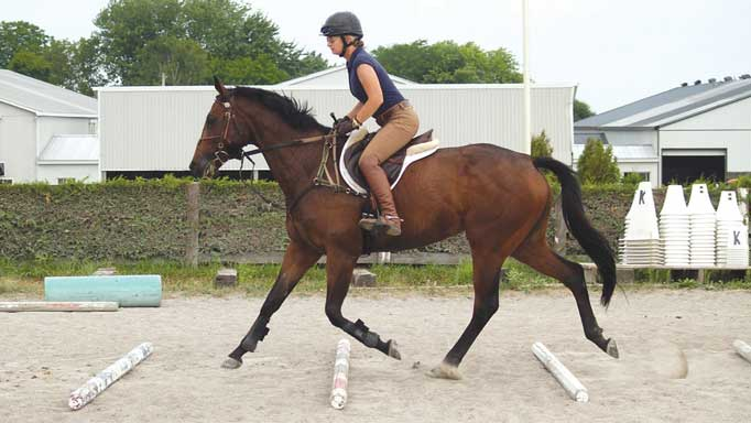 Thumbnail for Starting Gate to Start Box: OTTBs in Eventing