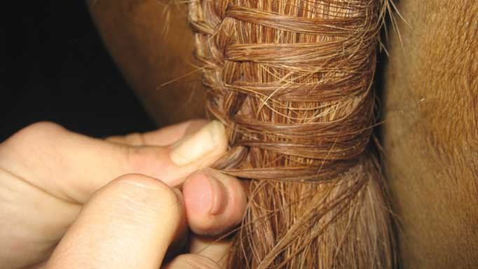 Thumbnail for The Perfect Tail Braid