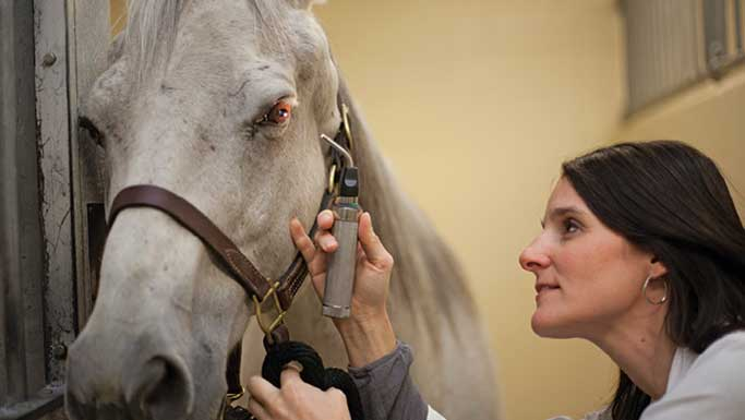 Thumbnail for What is Equine Recurrent Uveitis?