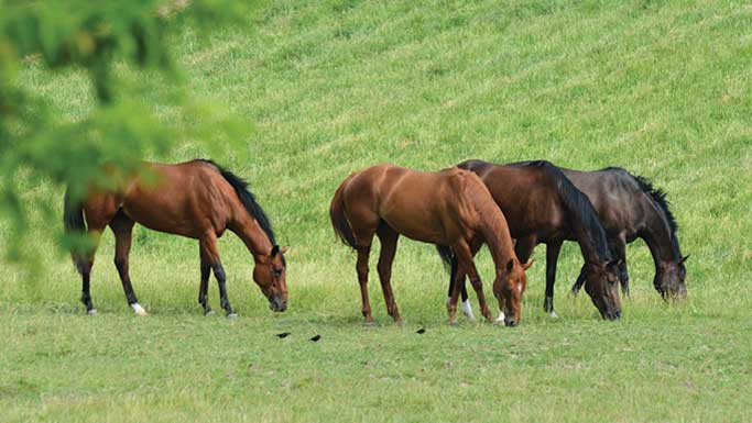 Pasture Systems and Management for Better Forage