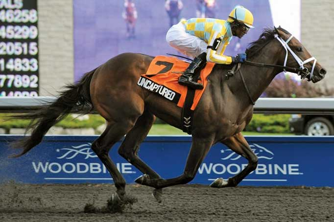 Thumbnail for 2012 Horse of The Year & Champion Two-Year-Old Colt: Uncaptured
