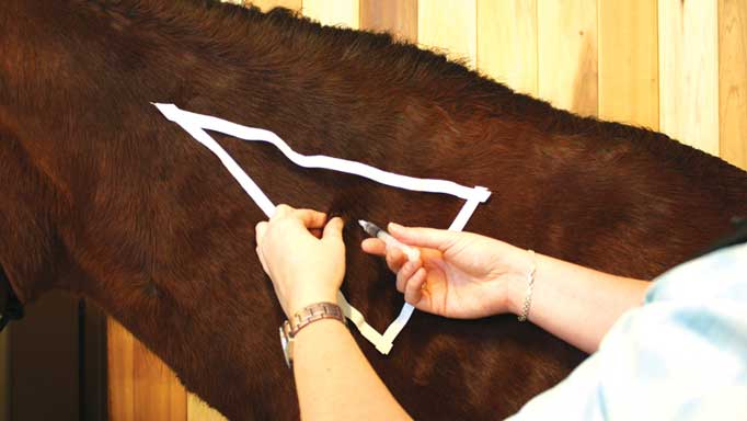 Injections For Horses and How To Do It Yourself: Types and