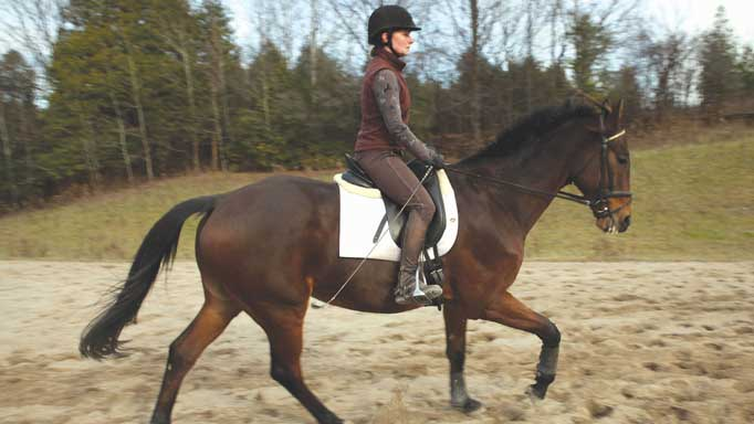 Thumbnail for Improving the Quality of the Canter with Diana Burnett