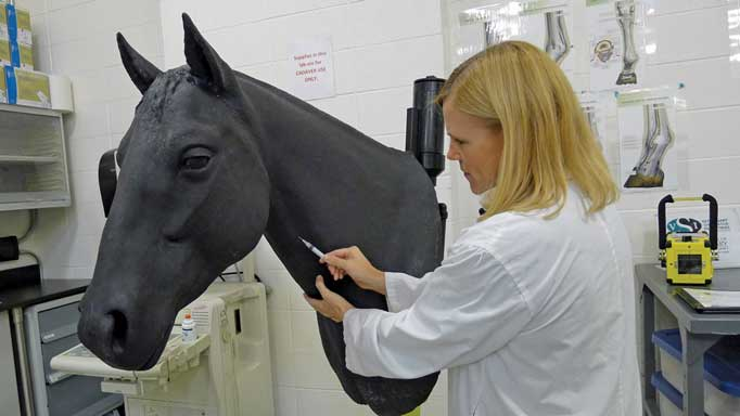 Thumbnail for Equine Veterinary Simulators at the University of Calgary