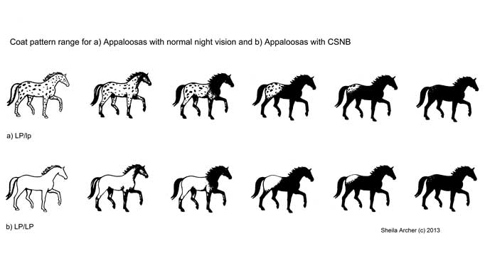 Thumbnail for Equine Genomics: A Treasure Hunt for Answers