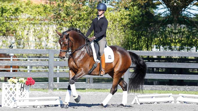Thumbnail for Training Tips with Chris von Martels: Canter-Trot Transitions