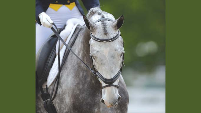 Thumbnail for 9 Tips for Eventing Dressage De-Stressing with Kristi Newman