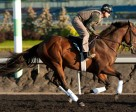 Queen's Plate contender Ami's Flatter with exercise rider Bill O'Connor. Photo by Michael Burns Photography