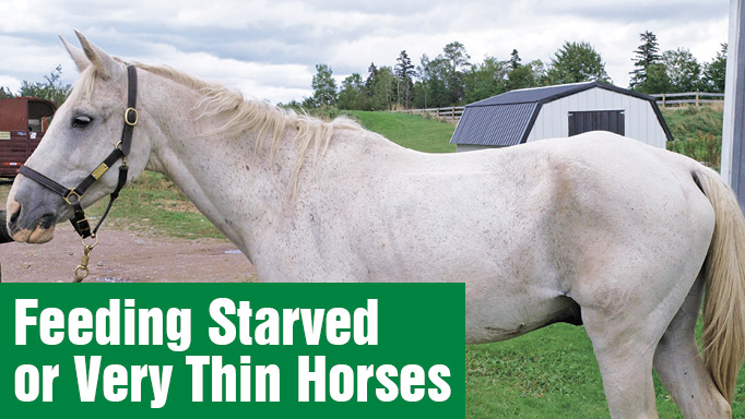 Thumbnail for Formulating a Feed Program for: An Underweight Horse