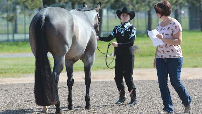 Thumbnail for Showmanship at Halter