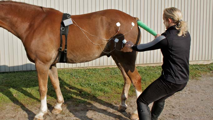 Thumbnail for Equine Rehabilitation