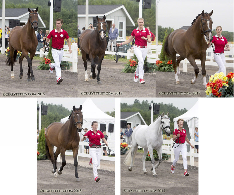 Thumbnail for Canadian Dressage Team Ready to Start Pan Am Competition
