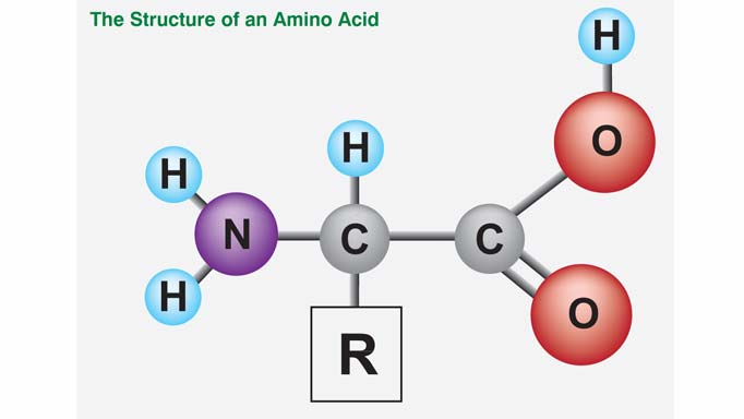 Thumbnail for Understanding Amino Acids