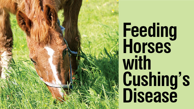 Thumbnail for Feeding Horses with Cushing's Disease