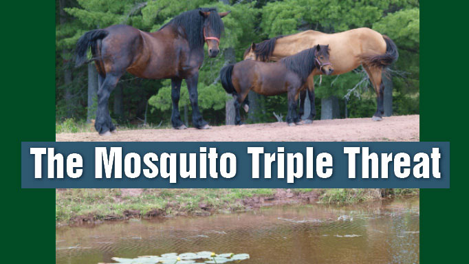 Thumbnail for The Mosquito Triple Threat