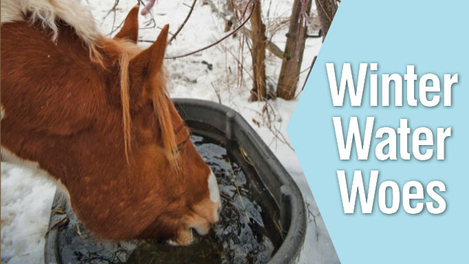 Thumbnail for Winter Water Woes