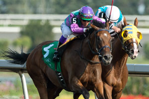 Luis Contreras guides #5 (outside Purple and green blocks) Elusive Collection to victory in the $100,000 Etobicoke Stakes at Woodbine. Photo by Michael Burns Photography