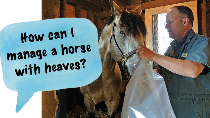 Thumbnail for Managing a Horse with Heaves